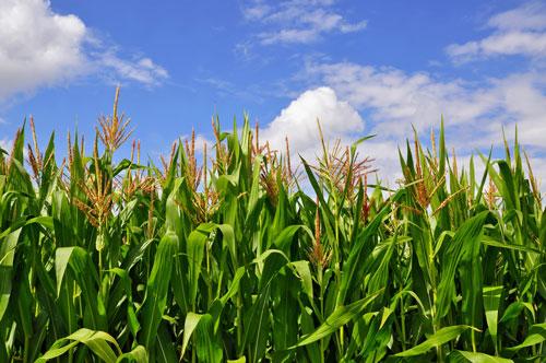 Best 3-18-18 Fertilizer