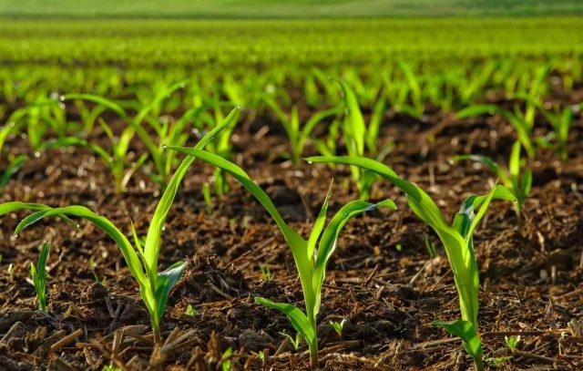 Best-liquid-starter-fertilizer